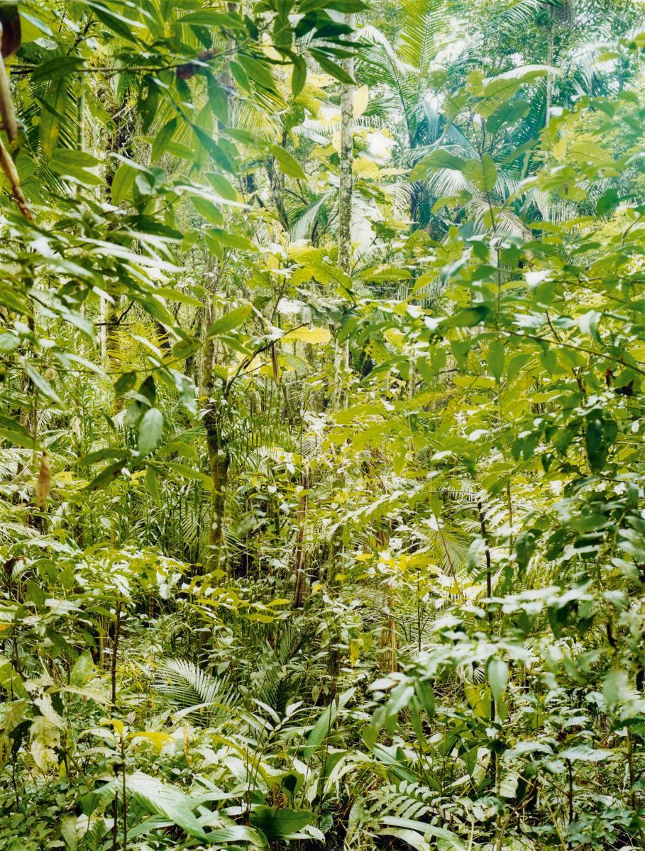 Thomas Struth, Paradise. 22 Sao Francisco de Xavier, Brasil 2001.