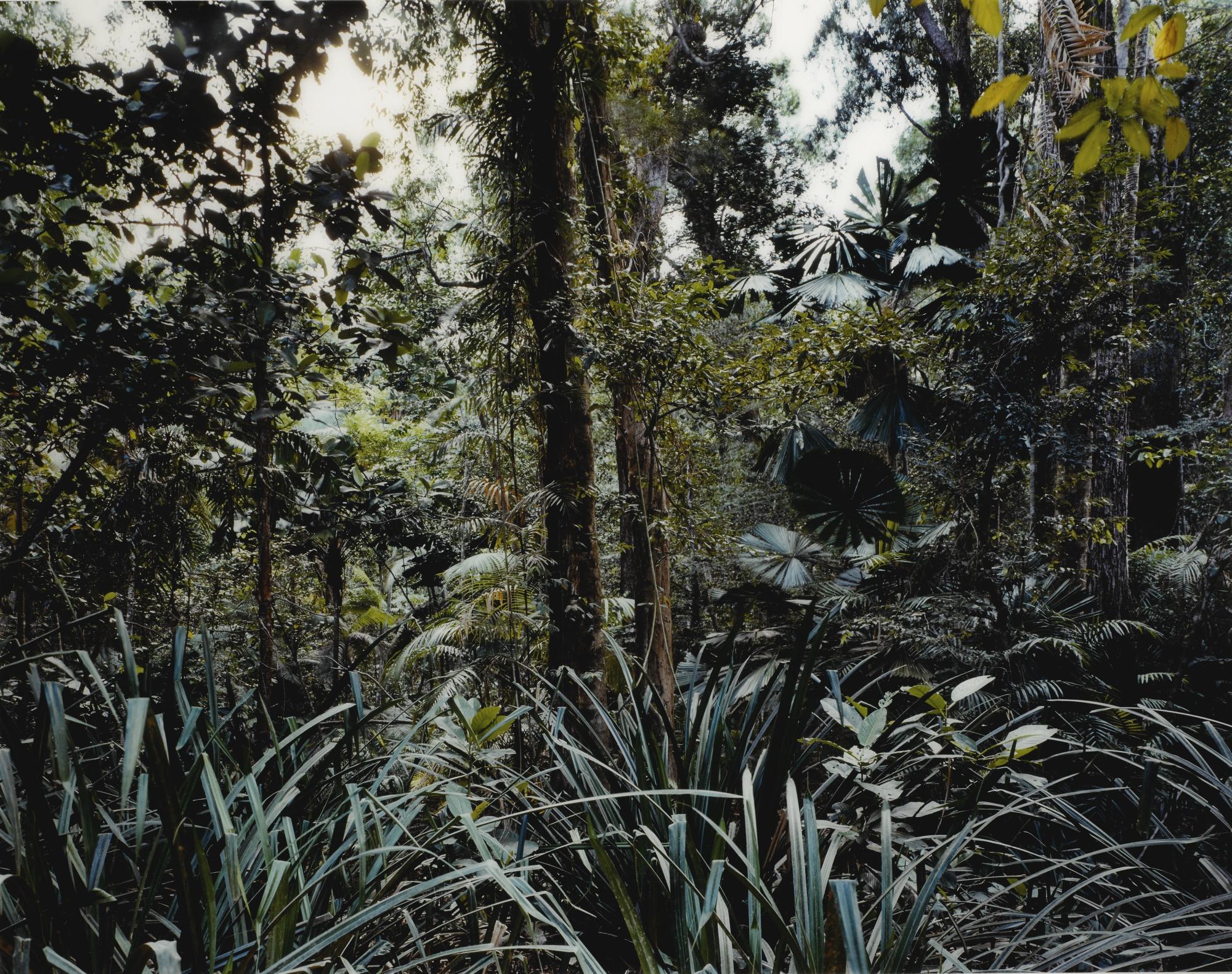 Thomas Struth Paradise-7 Daintree Australia 1998